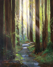 Redwood Creek Oil painting