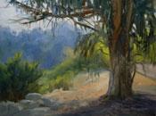 Arroyo Guardian Eucalyptus Tree South Pasadena