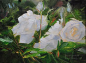 White Roses Impressionist Oil Painting Miniature 6 x 8 study